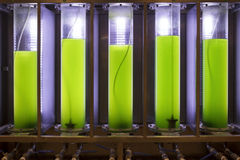 Photobioreactor in lab algae fuel biofuel industry Stock Photography