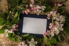 Photoframe bleu avec les branches fraîches de fleur de ressort photo stock