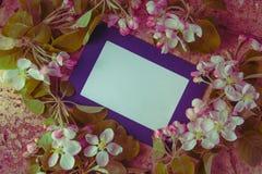 Photoframe bleu avec les branches fraîches de fleur de ressort photographie stock