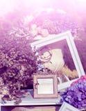Photoframes und Vase mit Blumen im Garten Lizenzfreies Stockfoto
