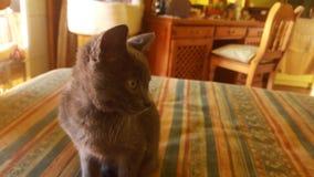 Photogenic кошачье Стоковые Изображения RF