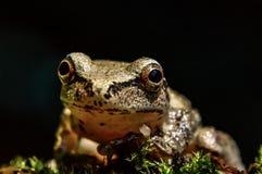 Photogenic tree frog Stock Photo