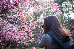 Photograher holding DSLR Camera for shoot photo in Chiangmai ,Th Royalty Free Stock Images