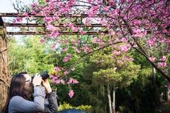 Photograher tenant l'appareil-photo de DSLR pour la photo de pousse dans Chiangmai, Th Images libres de droits