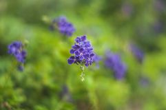Image of Flower in Garden stock photography