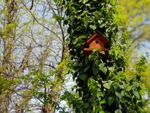 A photograph of bird house on a tree stock photo