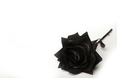 Photograph of a Black Rose on a White Background. Beautiful fabric black rose on a white background Royalty Free Stock Photos