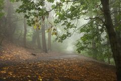 Misty trail in the forest stock photography
