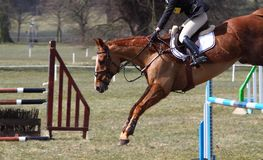 Horse jumping C Royalty Free Stock Photos
