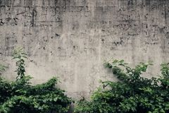 Can be used as a good background, suitable as a flat design material, mottled walls with green vine, I feel particularly style. Stock Images