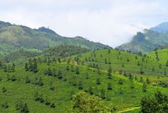 Green Landscape in Munnar, Idukki, Kerala, India - Natural Background with Mountains and Tea Gardens. This is a photograph of a landscape captured in Munnar royalty free stock photos