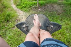 Photograph of the legs of an elephant driver. Indian elephant, top view royalty free stock photo