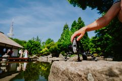 Photograph male hand handling an old vintage camera on tripod in front of water pond film wedding event in known. Landmark japanese house in Planten un Blomen stock photo