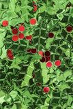 Holly and berry confetti. Photograph of metallic green holly leaves and red berry confetti royalty free stock photo