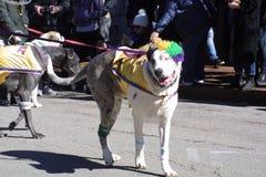 Pet Parade Soulard Mardi Gras 2019
