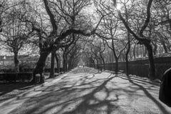 Parc path in Santiago de Compostela. Photograph of a path in a parc in Santiago de Compostela, Galicia, Spain royalty free stock photo