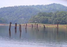 Periyar Lake with Hills in Background, Thekkady, Kerala, India Stock Images