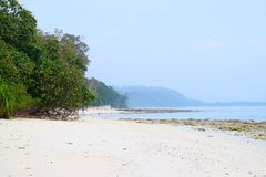 Pristine and Tranquil White Sandy Beach with Mangrove Trees with Azure Sea Water and Clear Sky - Kalapathar, Havelock, Andaman. This is a photograph of pristine royalty free stock photography