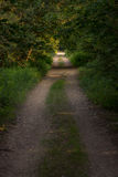Photograph of a road in the wood completely surrounded by trees Stock Photography
