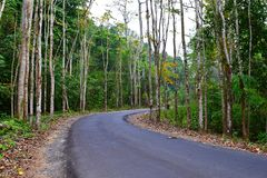 Scenic Asphalt Concrete Road through Dense Forest and Greenery in an Indian Village. This is a photograph of a scenic asphalt concrete road through dense forest stock photos
