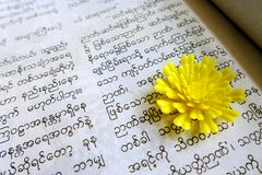 Reading burmese book Stock Images