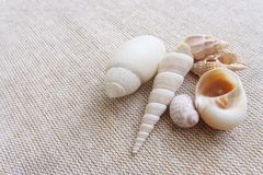 Seashells on linen background still life. A photograph showing a few light color sea shells on natural light brown linen.  Shells are in different shapes and Royalty Free Stock Photos