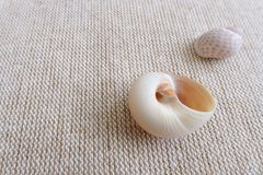 Seashells on linen background still life stock photo