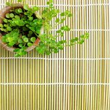 Small potted plant bamboo mat background Royalty Free Stock Photo