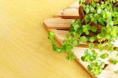 Small potted plant on wooden stand Royalty Free Stock Photos