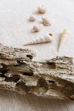 Drift wood & seashells still life stock photos
