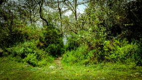 The entrance to the path royalty free stock image