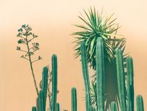 Green cactuses photograph Stock Photo