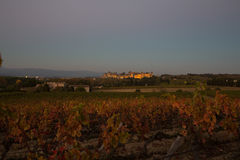 Cacassonne wine yard in a dusk. Photograph of strenght and wine yard ,Carcassonne, France Stock Images