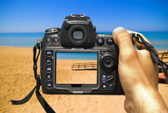 Photograph the summer royalty free stock image