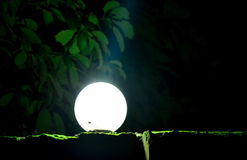Photograph taken in darkness. This photo was taken at night focusing on a lit bulb on a wall fence royalty free stock photos