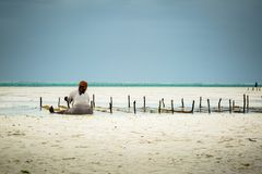 Woman sitting on sand on shore of Zanzibar gathering kelp royalty free stock images
