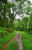 Nature Trail in Green Forest - Periyar Forest, Kerala, India. This is a photograph of tracking path through Periyar Forest in Kerala, India, Asia... The path Royalty Free Stock Image