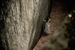 Photograph, Tree, Wood, Darkness Royalty Free Stock Photo