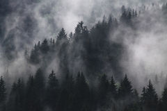 Photograph of Trees With Fog Stock Photo