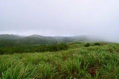 Cymbopogon - Lemongrass, Greenery, and Hills - Suicide Point in Mooppanpara, Vagamon, Kerala - Natural Background Stock Photo