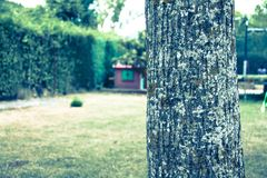 Photograph of walnut trunk near and background of house diffused. Aragon, Spain. Beautiful, green, tree, trees, outdoor, water, plant, light, park, environment royalty free stock photos