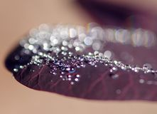 The photograph of a water drop on the leaf Royalty Free Stock Photo