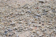 White Seashells and Stones of Different Shapes and Sizes on Beach - Natural Abstract Background stock photo