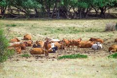 Herd in nature royalty free stock photos