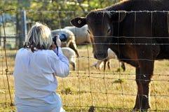 Photographe d'animal familier de femme photographiant des animaux de ferme de variété Image stock