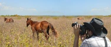 Photographe de faune Image stock