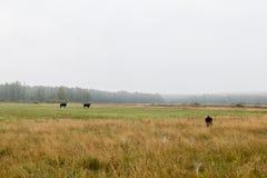 Photographe de naturaliste caché dans l'herbe avec le téléobjectif photographie stock libre de droits