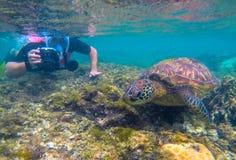 Photographe et tortue de mer sous-marins Activité de touristes naviguant au schnorchel avec des tortues Photo sous-marine de tort image libre de droits