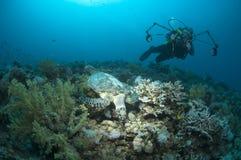 Photographe et tortue sous-marins photo libre de droits