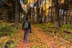 Photographe masculin de vue arrière dans la forêt lumineuse d'automne photo libre de droits